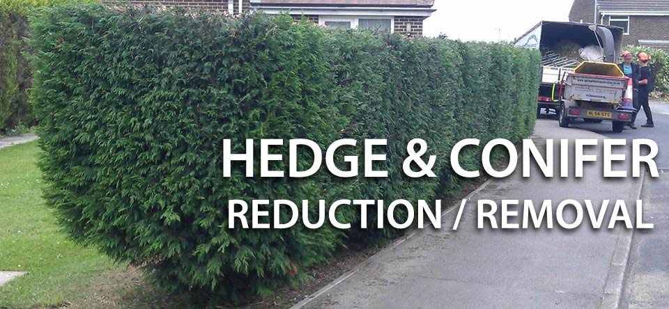 Hedge Reduction by Springfield Tree Services