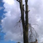 Tree Removal by Springfield Tree Services