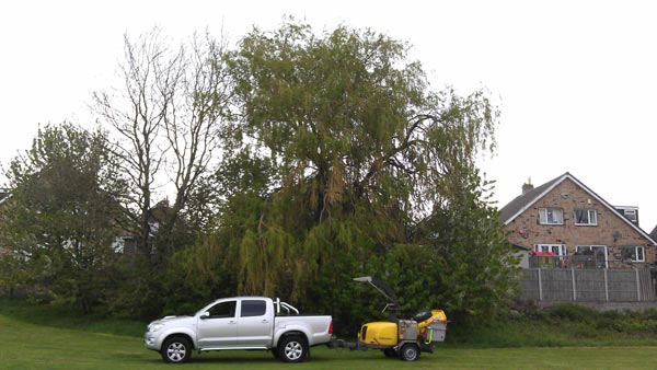 Springfield Tree Remova