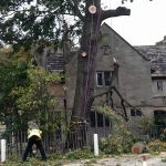 Springfield Tree Services tree felling and removal