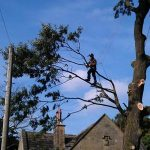 Tree Pruning by Springfield Tree Services