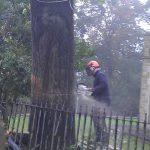 Tree felling by Springfield Tree Services