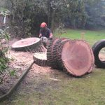 Safe Tree Removal, Felling & Dismantling by Springfield Tree Services