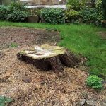Tree stump to be removed