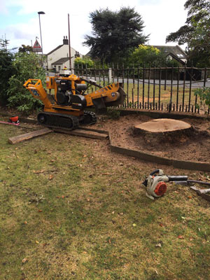 Stump Removal by Springfield