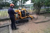 Stump Removal