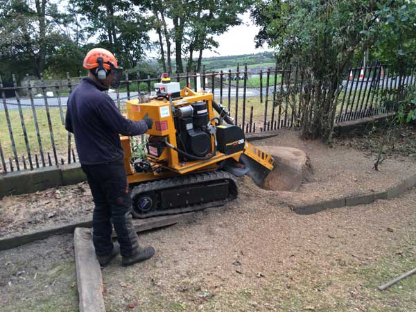 Stump Grinding by Springfield Tree Services