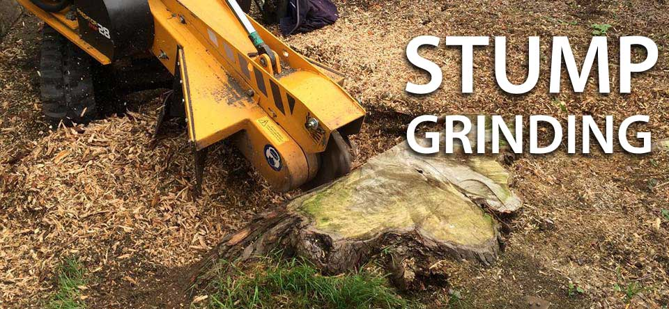 Stump Grinding by Springfield