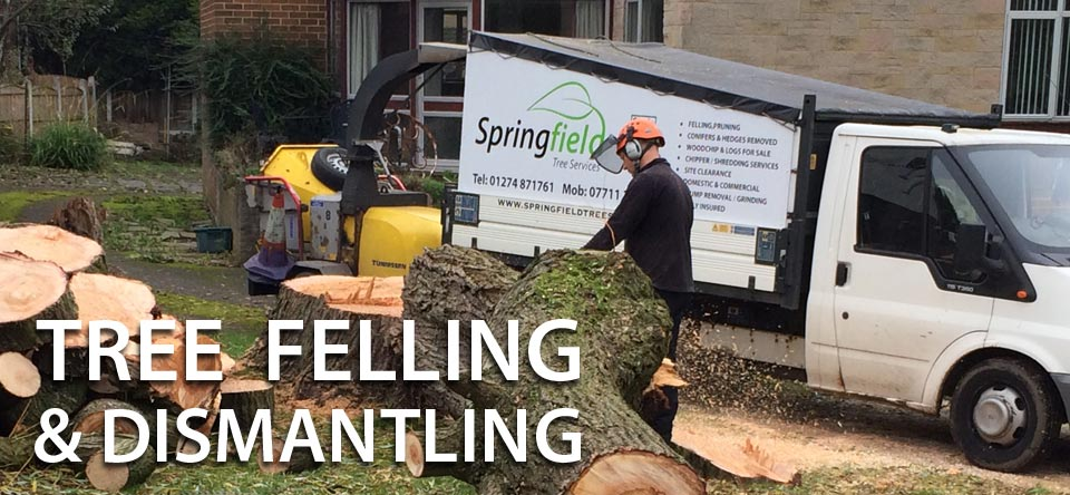 Tree Removals and dismantling
