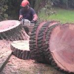 Tree Dismantling Springfield Tree Services