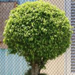 Springfield Tree Services Tree Pruning