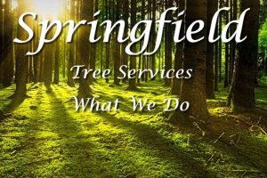 Springfield Tree Services - What We Do