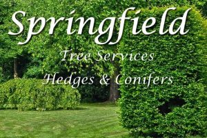 Hedges and Conifers