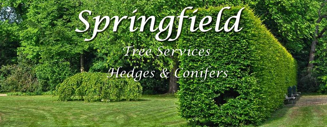 Springfield Tree Services - Hedges & Conifers