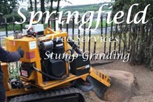 Springfield Tree Services - Stump Grinding