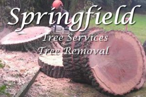 Springfield Tree Services - Tree Removal