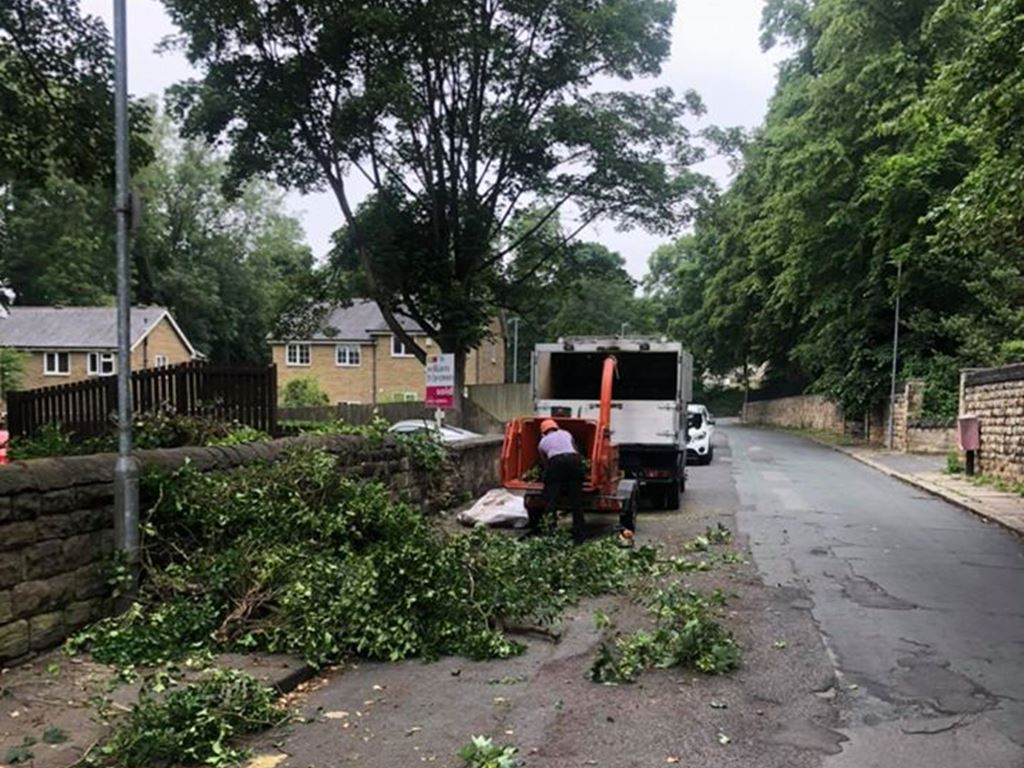 Springfield Tree Services - Sycamore Removed