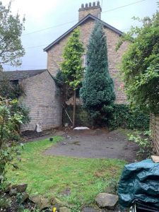 Conifer Removal - Springfield Tree Services
