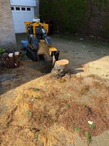 Springfield Tree Services - Cherry Tree Removal