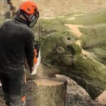 Springfield Tree Services, tree surgeons dismantle fallen tree
