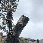 Springfield Tree Services - Tree Surgeon