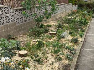 Springfield Tree Services - Conifer removal