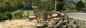 Springfield Tree Services - Tree Removal Clackheaton