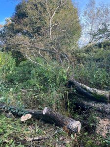 Local Tree Surgeons from Springfield Tree Services were called out on Friday to help a farmer who had a fallen tree