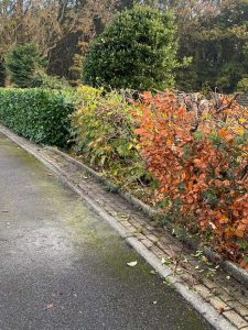 Springfield Tree Services - Hedges Cut Back
