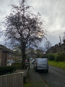 Tree Surgeons from Springfield Tree Services removed a large Hawthorn from a front garden