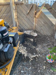 Springfield Tree Services removed a tree and it's stump for a customer in Batley