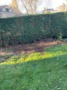 Variety of small trees removed - Springfield Tree Services