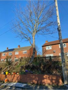 Local Cleckheaton tree surgeon