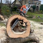 Local Cleckheaton tree surgeons remove dangerous Sycamores. Springfield Tree Services