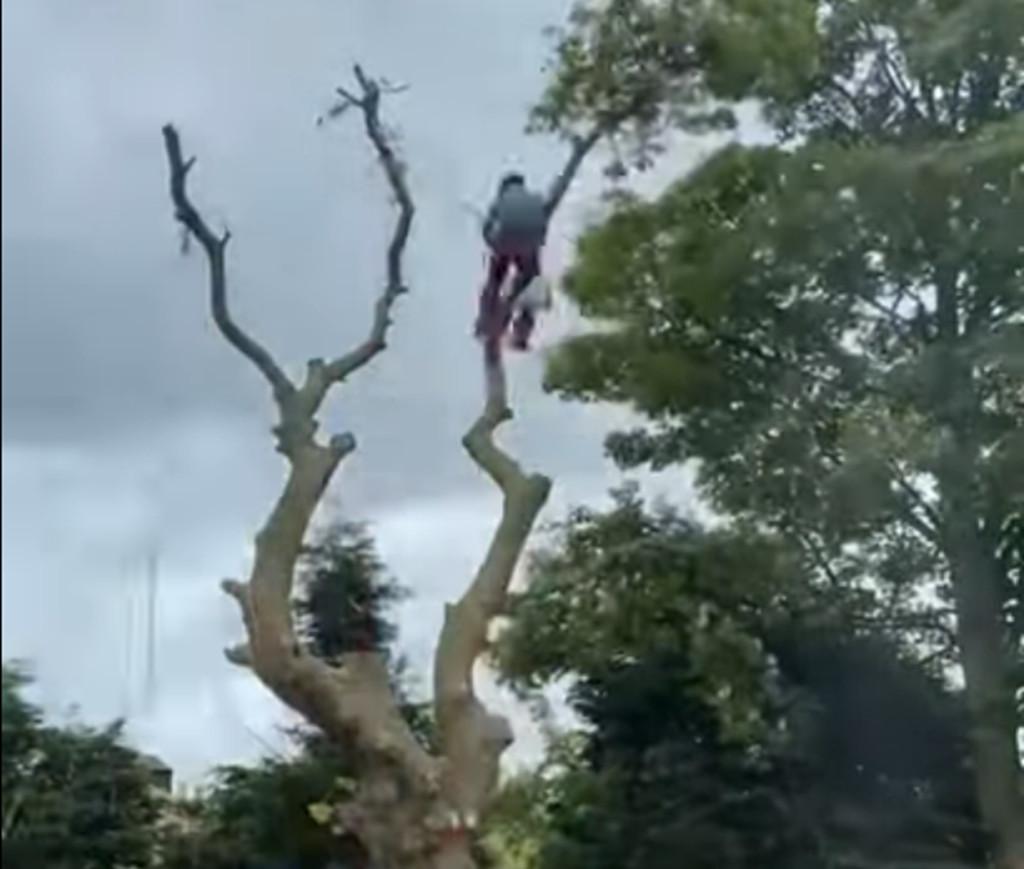Springfield Tree Services