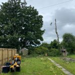 Springfield Tree Services Silver Birch Felled-