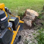 Springfield Tree Services Silver Birch Felled